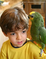 Boy and bird photo